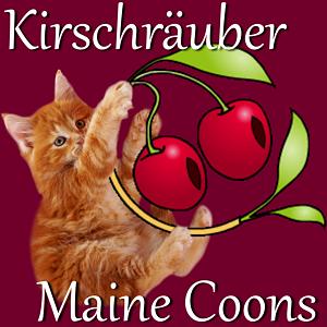 Die Kirschräuber - Maine Coon Katzenzüchter aus Altenburg / Thüringen